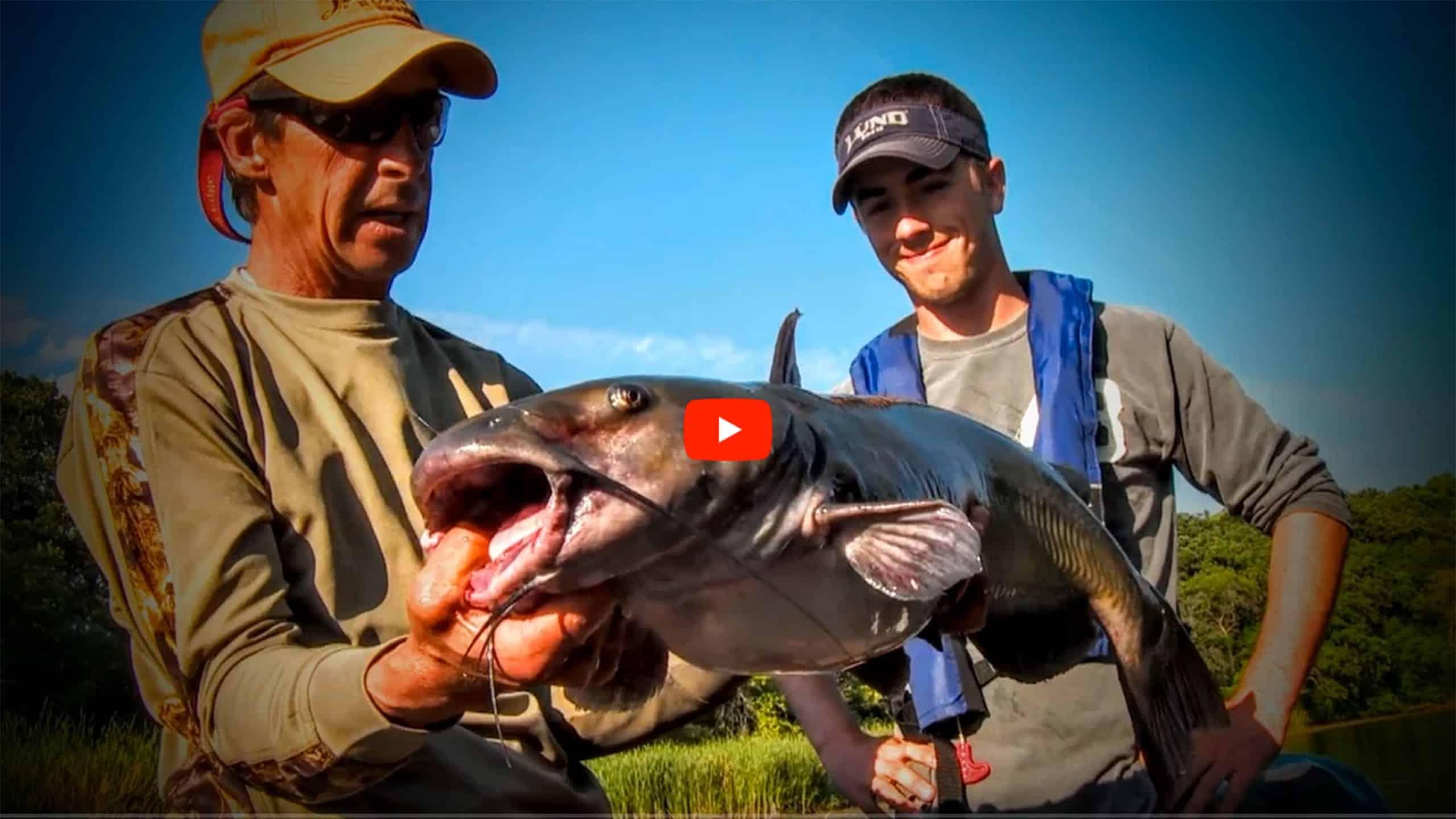 river catfish