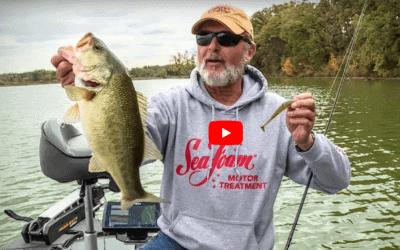Search Bait Fishing