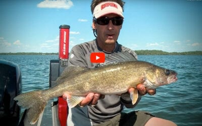 Forage Factor Walleye