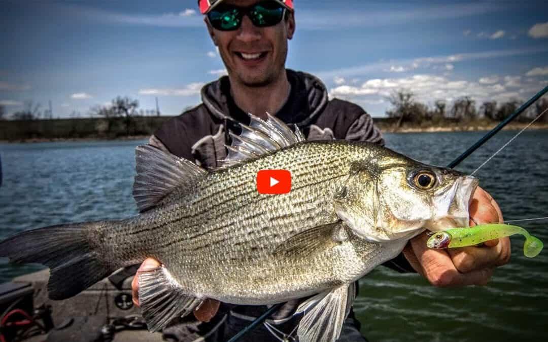 Understanding White Bass