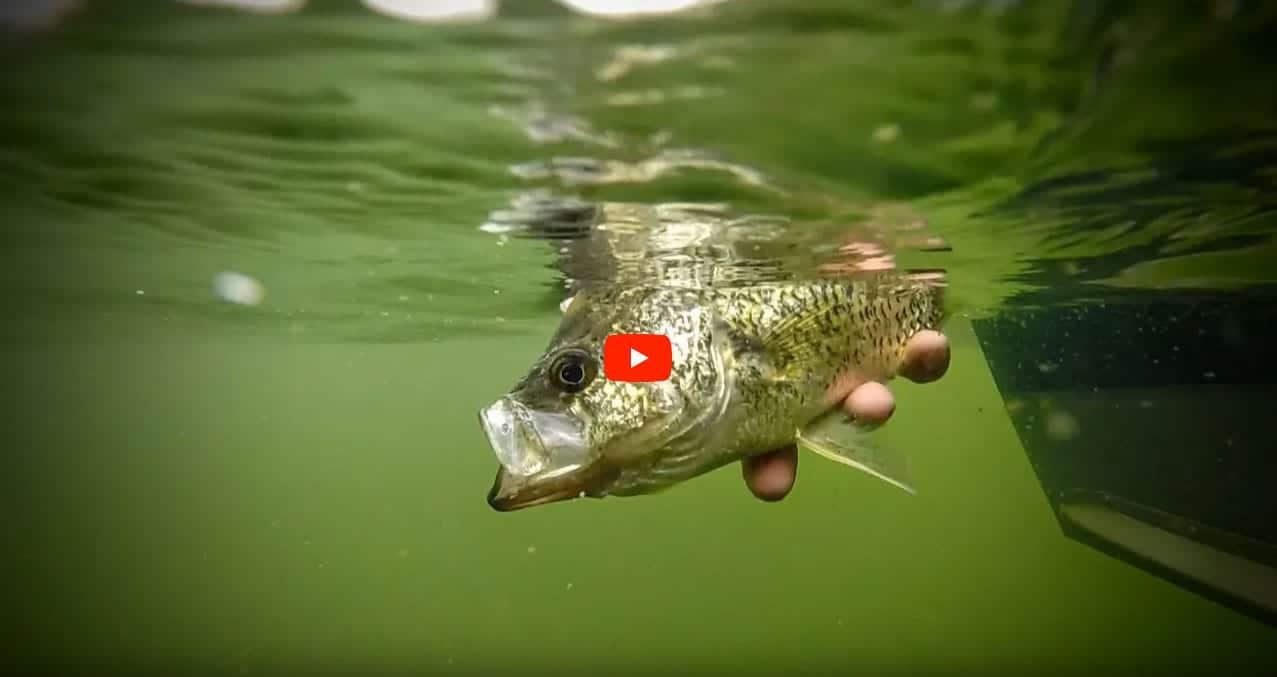 bobber-fishing-crappie