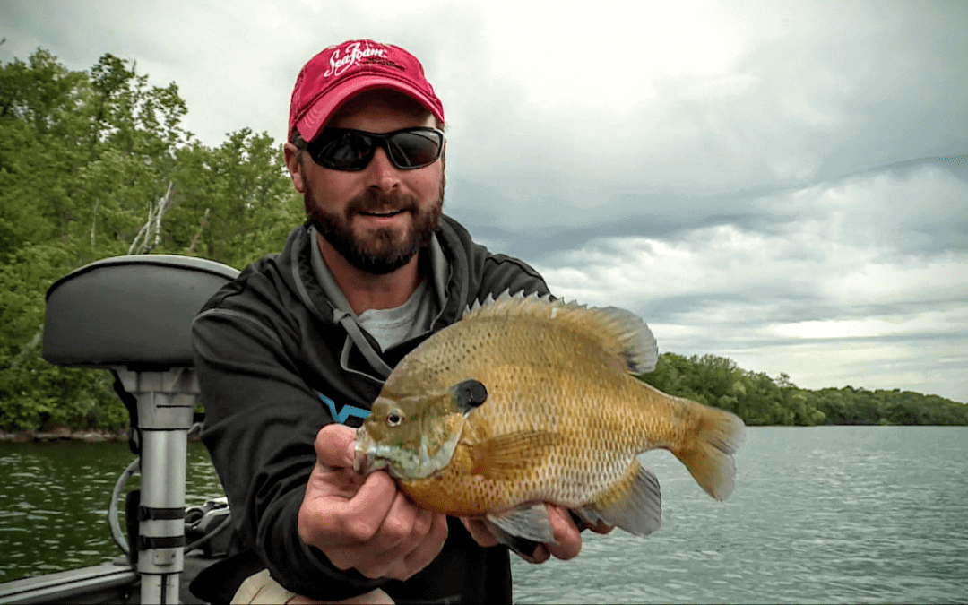 Drop-Shot Bluegills