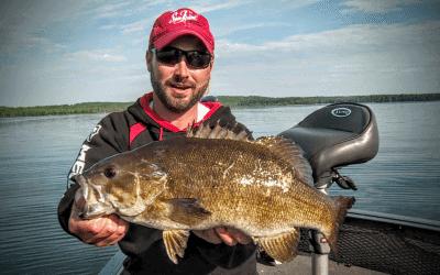 Postspawn Smallmouth Bass