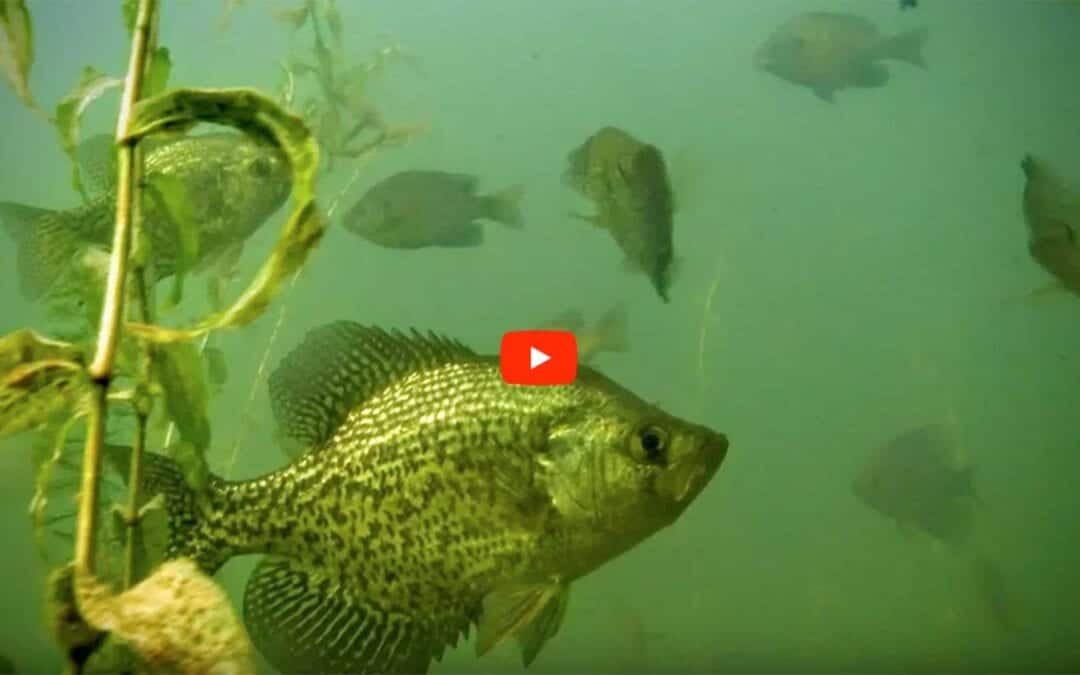 Summertime Crappie Fishing