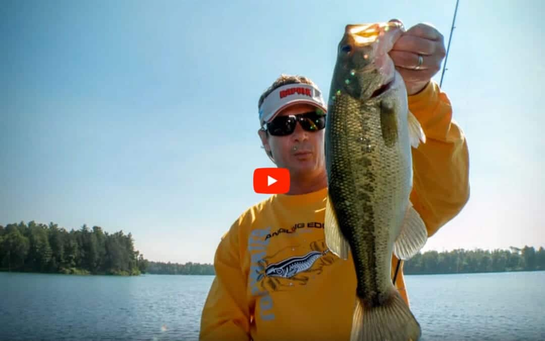 Largemouth Bass In Clear Water