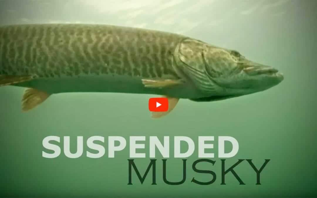 Suspended Musky