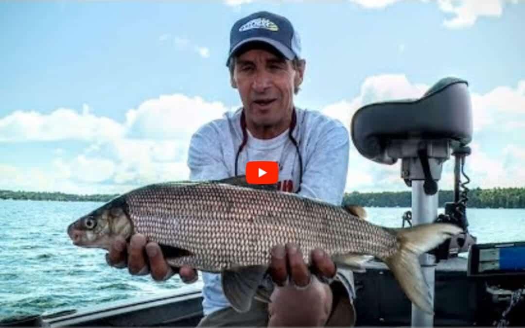 Understanding Whitefish