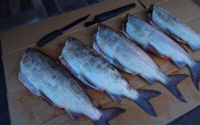 Whitefish Catch & Cook