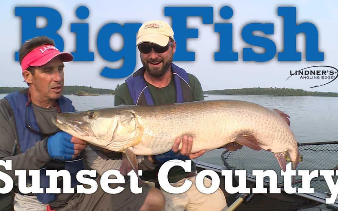 Big Fish in Sunset Country