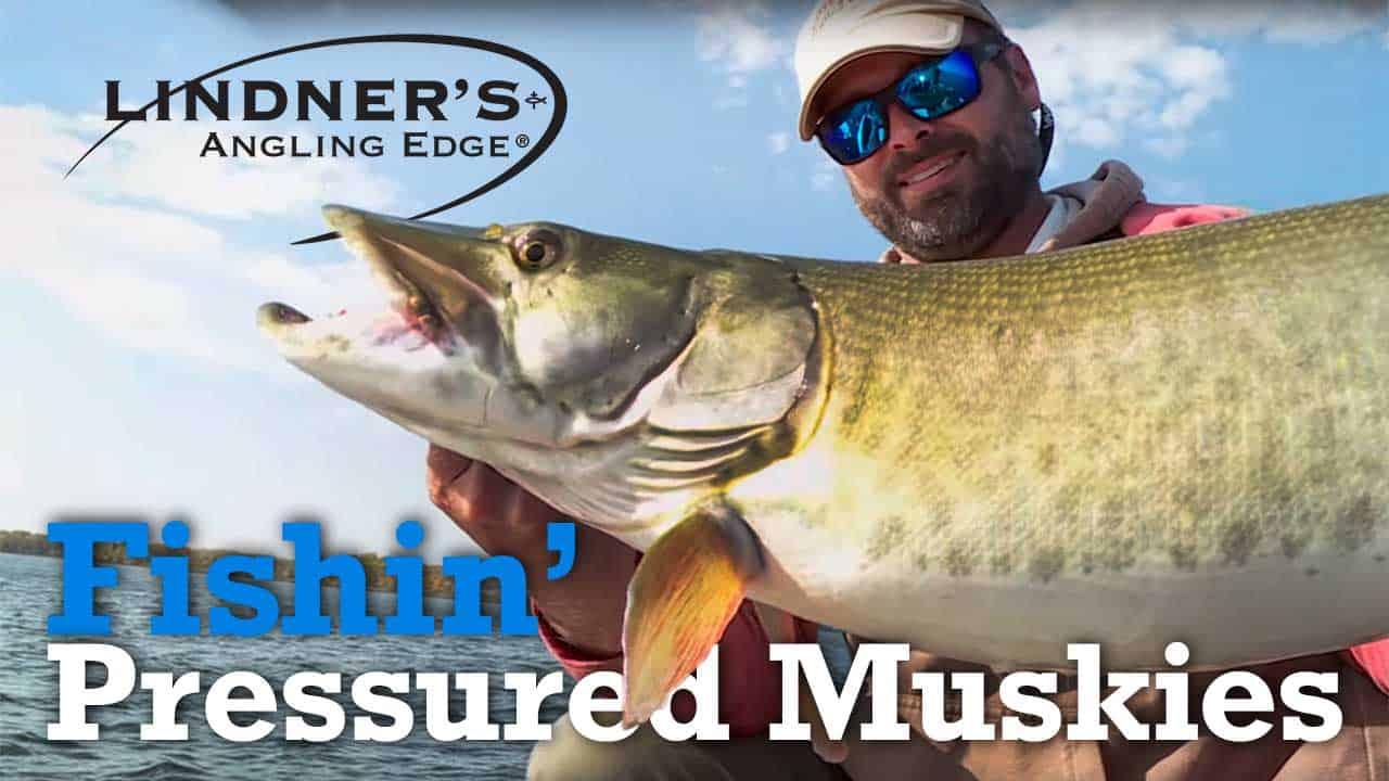 Fishing Pressured Muskies
