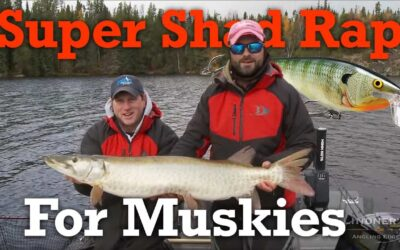Rapala Super Shad Rap for Musky Fishing